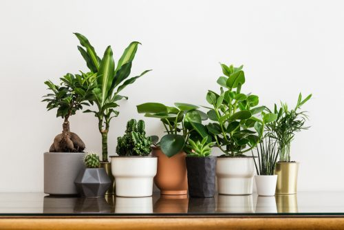 buy houseplants for a christmas present online