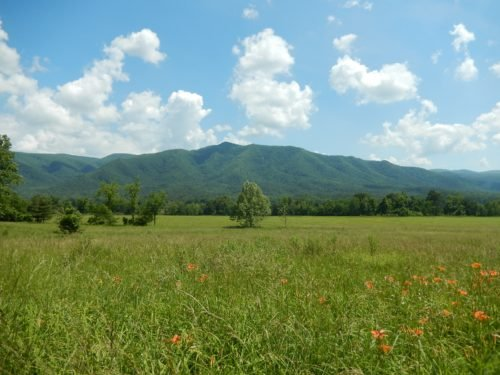 meadows in the countryside